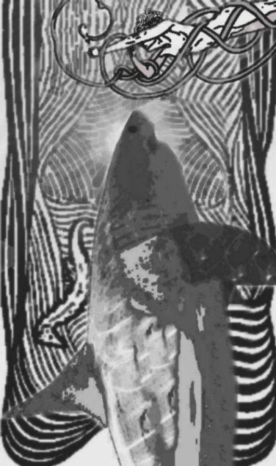 spirit shark