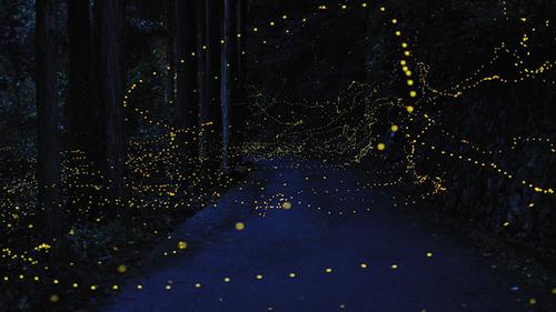 Gold Fireflies3